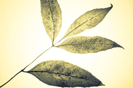 descriptive: Colored grungy mistical leaves. Studio shot with light spot in center