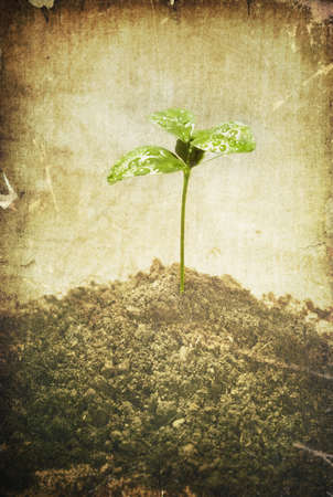 origins: Conceptual environmental image in grunge style. Green plant growth in soil.
