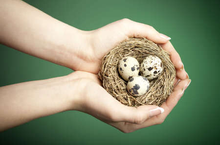 Careful female hands holding a bird nest with 3 eggs. Conceptual environmental image