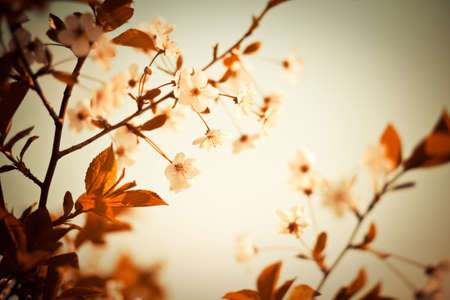 Abstract colors unreal cherry blossom background. Artistic colored image. Soft, low aperture shoot Reklamní fotografie