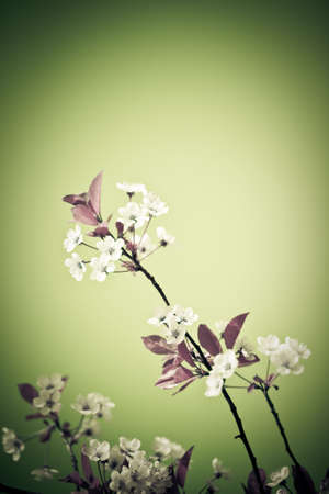 Abstract colors unreal cherry blossom background. Artistic colored image. Soft, low aperture shoot Stock Photo