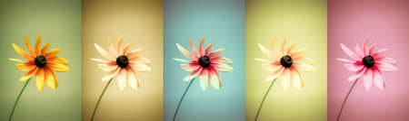 Panoramic set of 5 different colored flowers. Large image with rich color variation. Use in your design! Stock Photo