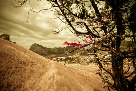 Dramatic ethnic landscape with wish-tree on a foreground and path to mountains photo