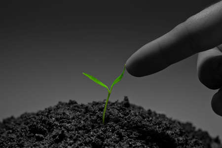 Human finger touching a young plant. Unity with nature; harmony concept; business concept Stock Photo - 6822980
