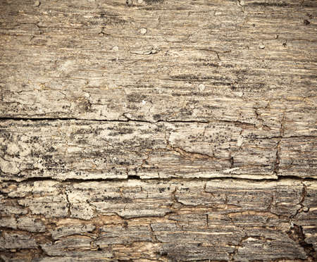 rotting: Rotting dry  wooden west background damaged by weather and parasites