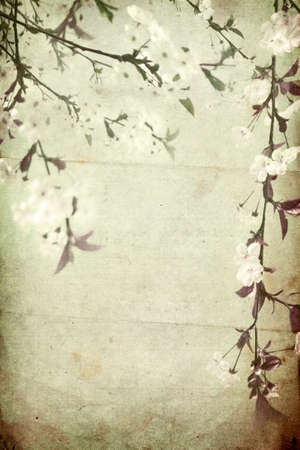 Mix of grunge paper and cherry blossom branches  Grunge artistic background