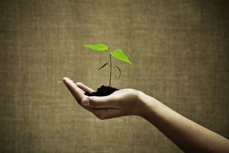 charities: Female hand holding a new green life
