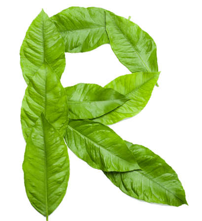 Letter R created from fresh green leaves  Letter from word NATURE  see more in my portfolio   Object on white Фото со стока
