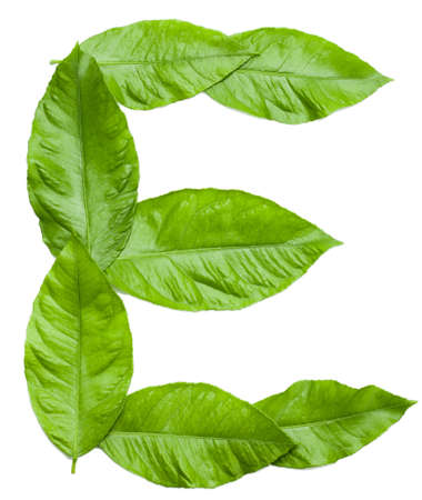 Letter E  created from fresh green leaves  Letter from word NATURE  see more in my portfolio   Design element on white