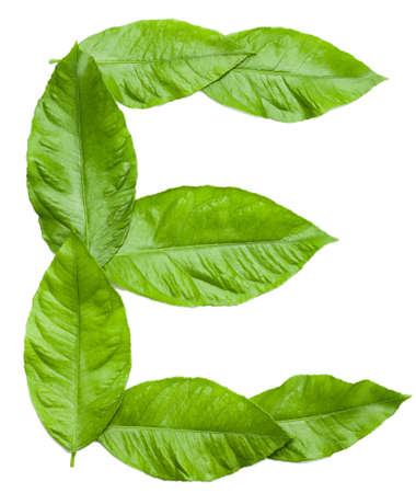 lettres alphabet: Lettre E créé à partir de feuilles fraîches Lettre vert de mot NATURE voir plus dans mon élément de conception du portefeuille sur blanc Banque d'images