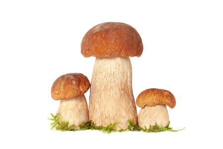 Tre funghi porcini del re della foresta con muschio isolato su bianco