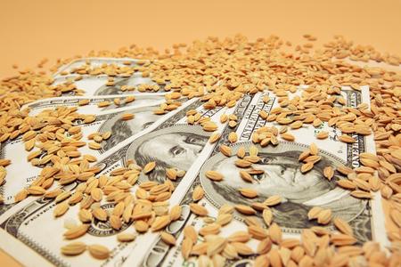 Dollar banknotes sprinkled with weat grains. Harvest, investment, revenue or agricultural market concept