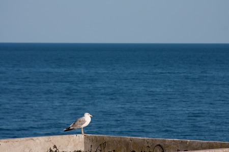 brawl: seagull sitting on a background of the sea. vacation concept Stock Photo