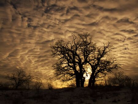 Group of trees on top of a sand dune against a background of sunset clouds. Desert in the winter. Stock Photo