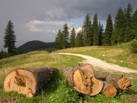 clearing the path:           SAVE THE FOREST !