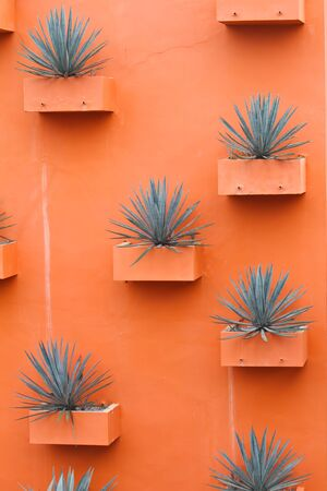 sisal: Sisal plant in pots on the wall Stock Photo