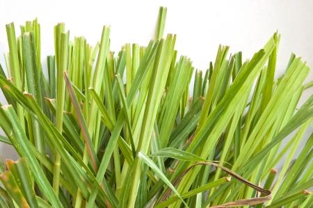 lemongrass: citronella and plant white background Stock Photo