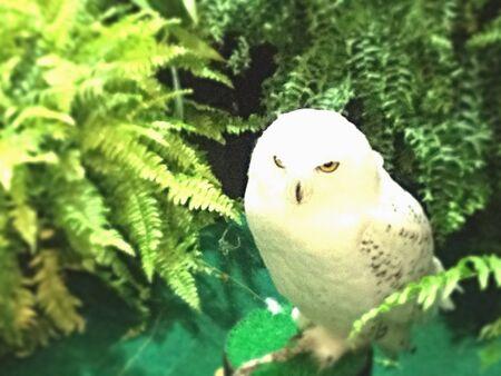 show garden: Snowy owl show in garden Stock Photo