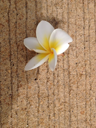 surface: Plumeria flowers on the surface Stock Photo