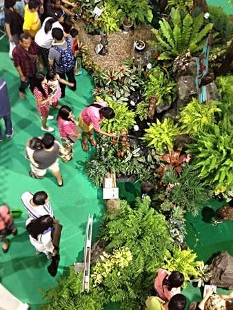 show garden: Pets festival show in garden