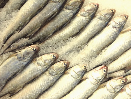 texture: Indian saimon on ice ground Stock Photo
