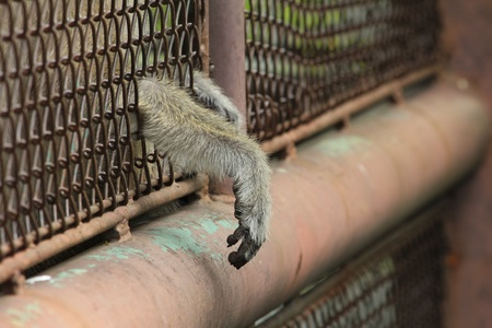 A monkey in the zoo put its hand outside the cage waiting for the  freedom photo