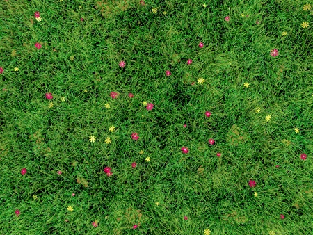 small flowers: Grass lawn with small flowers