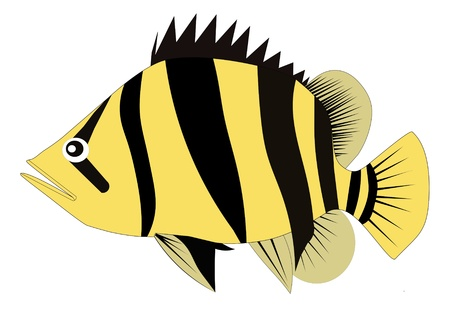 Siamese tiger fish  Datnioides microlepis  a famous big fresh water fish in aquariums