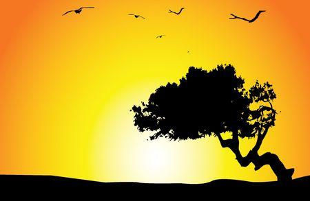 sunset Stock Photo - 3121782