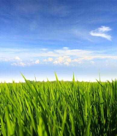 green grass field against blue sky Stock Photo - 12156655