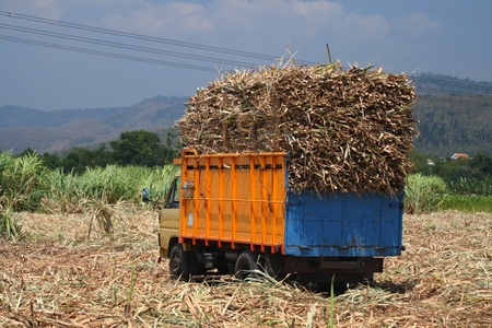 sugarcane truck with full cargo photo