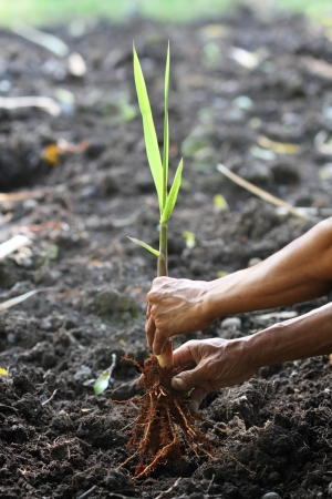 plantando un arbol: la plantaci�n de una nueva vida