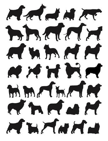 cane chihuahua: Specie Dog Molti silhouttes Vettoriali