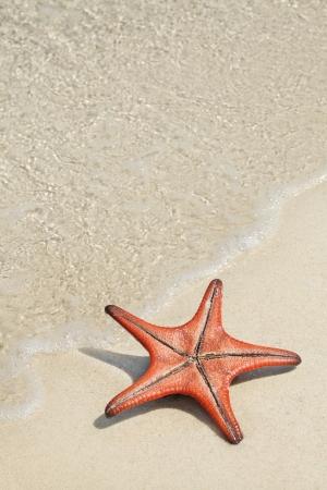Star fish on the white sandy beach