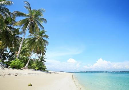 palm trees in tropical white sandy beach