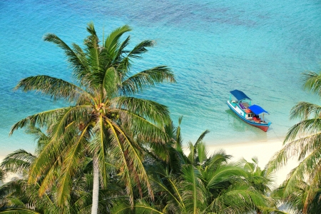 View of coconut palm trees and lonely boat by white sandy beach