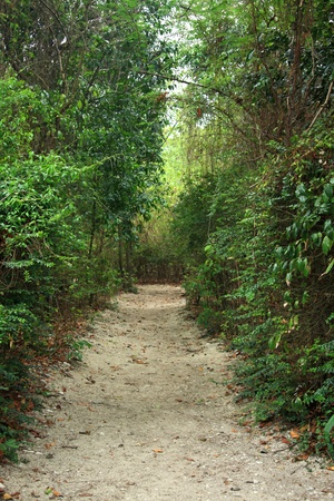 natural walk path in the garden Stock Photo