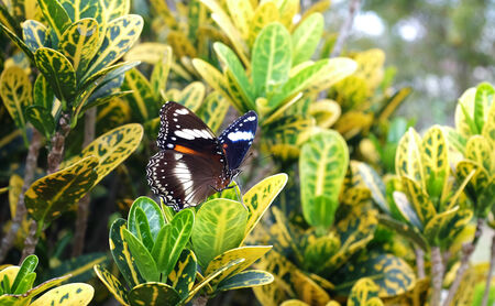 Monarch butterfly in a tropical garden Stock Photo