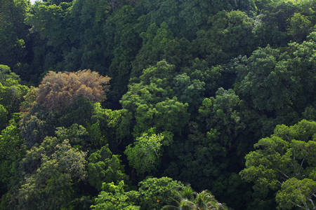 Aerial close up view of natural tropical rainforest Stock Photo
