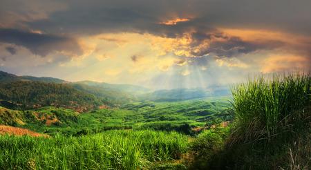 Sunset view of sugarcane plantation field landscape