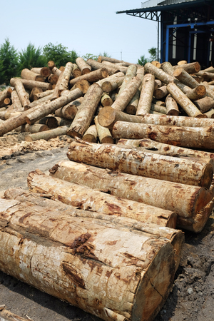 stock pile of lumber logs ready to be processed into plywood