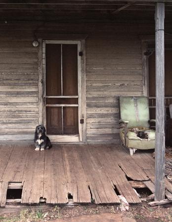 front porch: Guarde el perro sittting en el p�rche de entrada por la puerta Foto de archivo