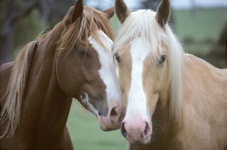 nudging: Two Horses Loving