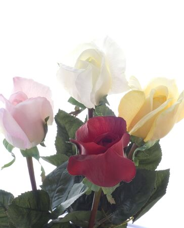 Pink, Red, Yellow, and White Roses Stock Photo