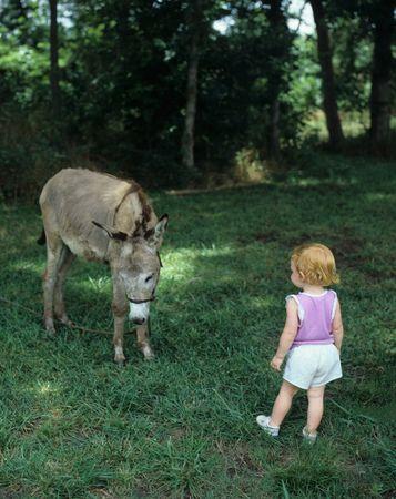 burro: Child and Burro Meet Stock Photo