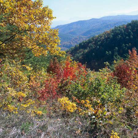 Fall Foliage in Mountain Ranges