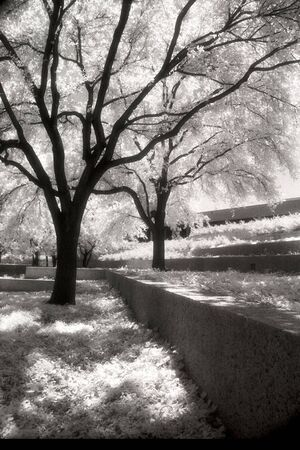 Infrared Black and White of Trees
