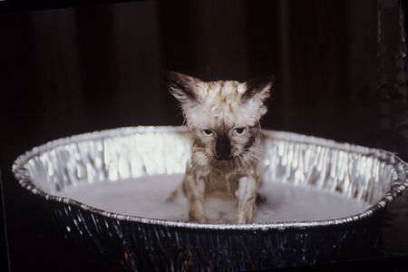 Unhappy Cat getting a Bath