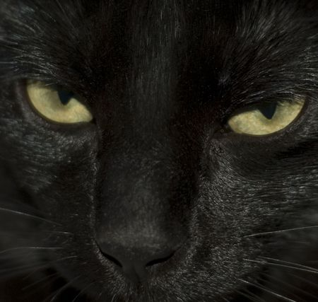 Close-Up of Black Cats Eyes