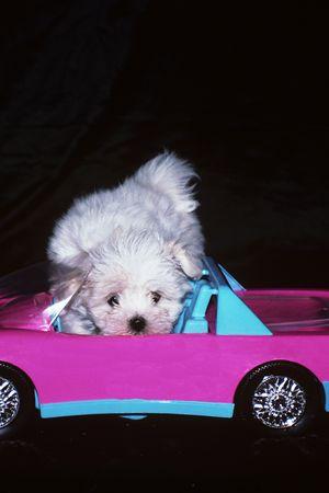 Dog checks out car